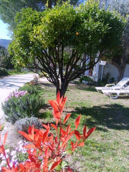 maison vue du jardin 2