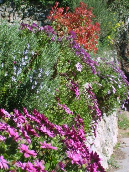 bordure de fleurs 1